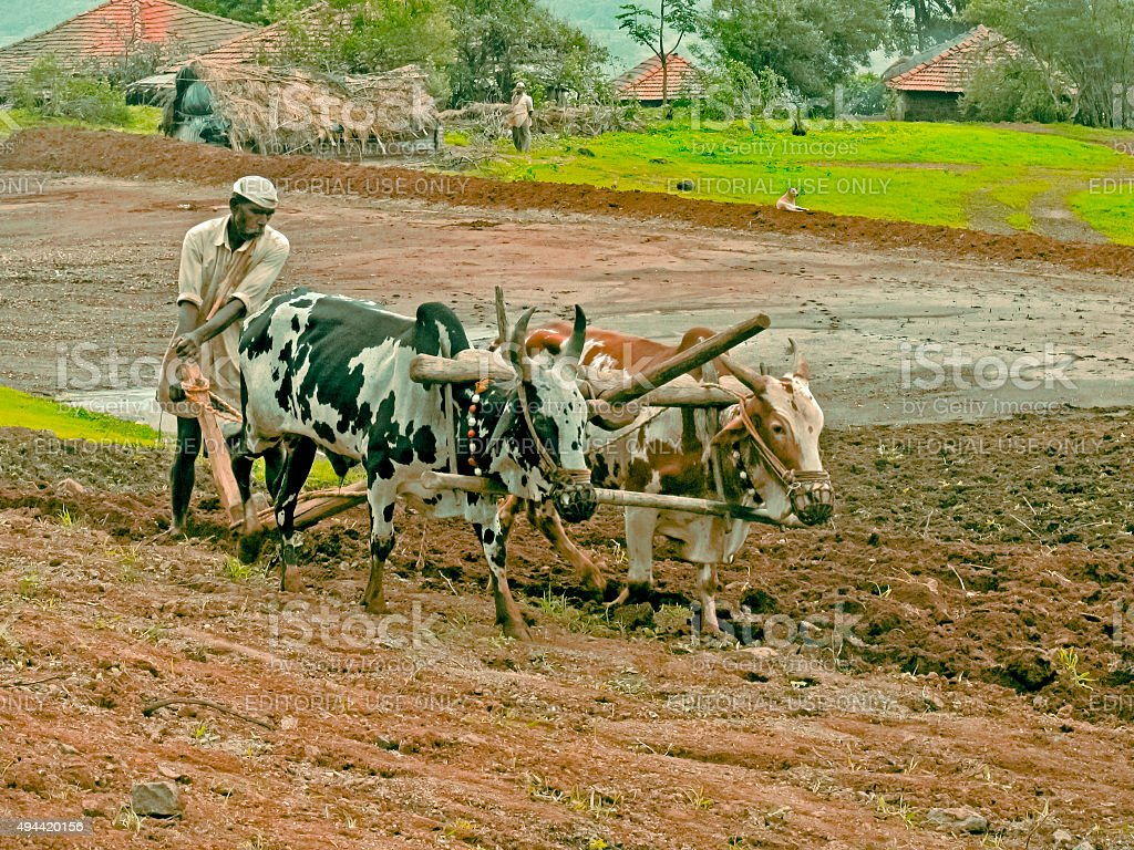 farmer is ploughing a field by traditional way, Maharashtra, stock photo