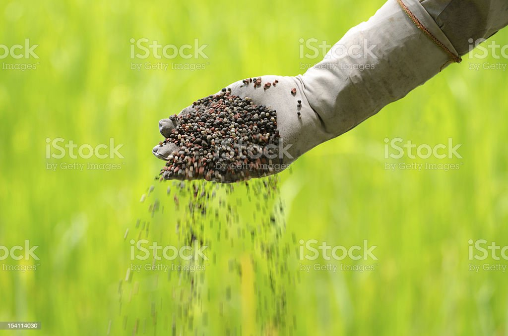 Farmer is pouring chemical fertilizer royalty-free stock photo