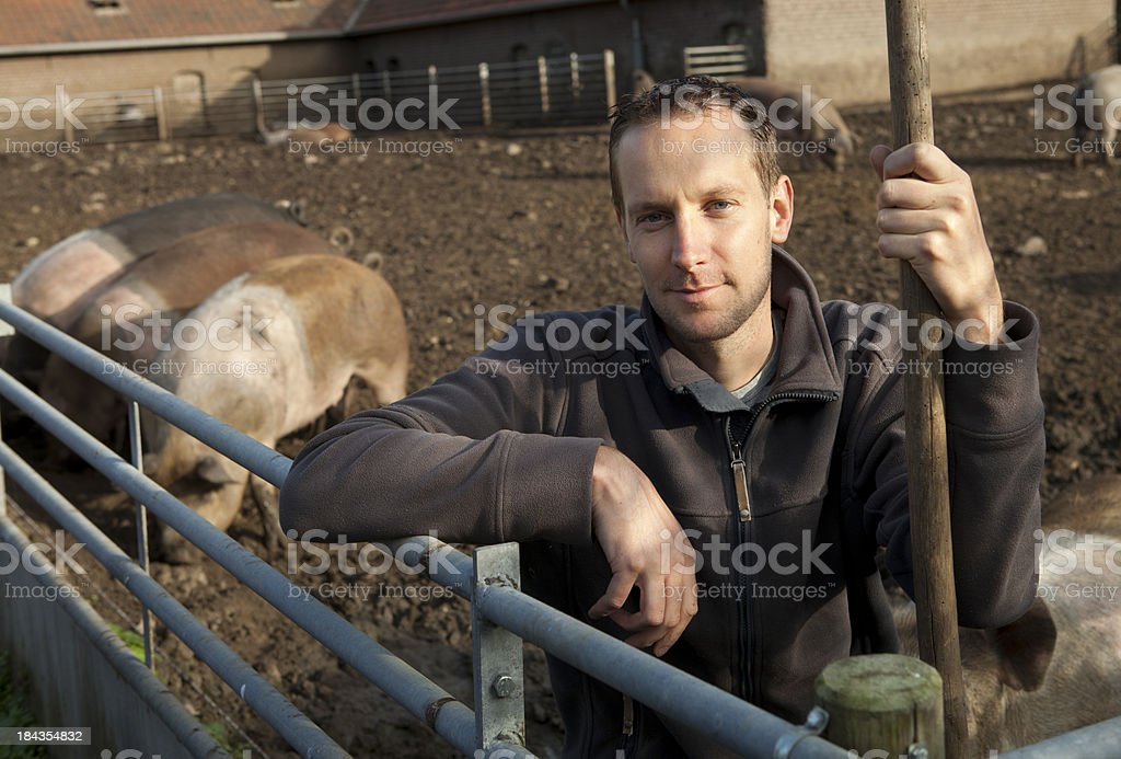 Farmer is working with pigs. stock photo