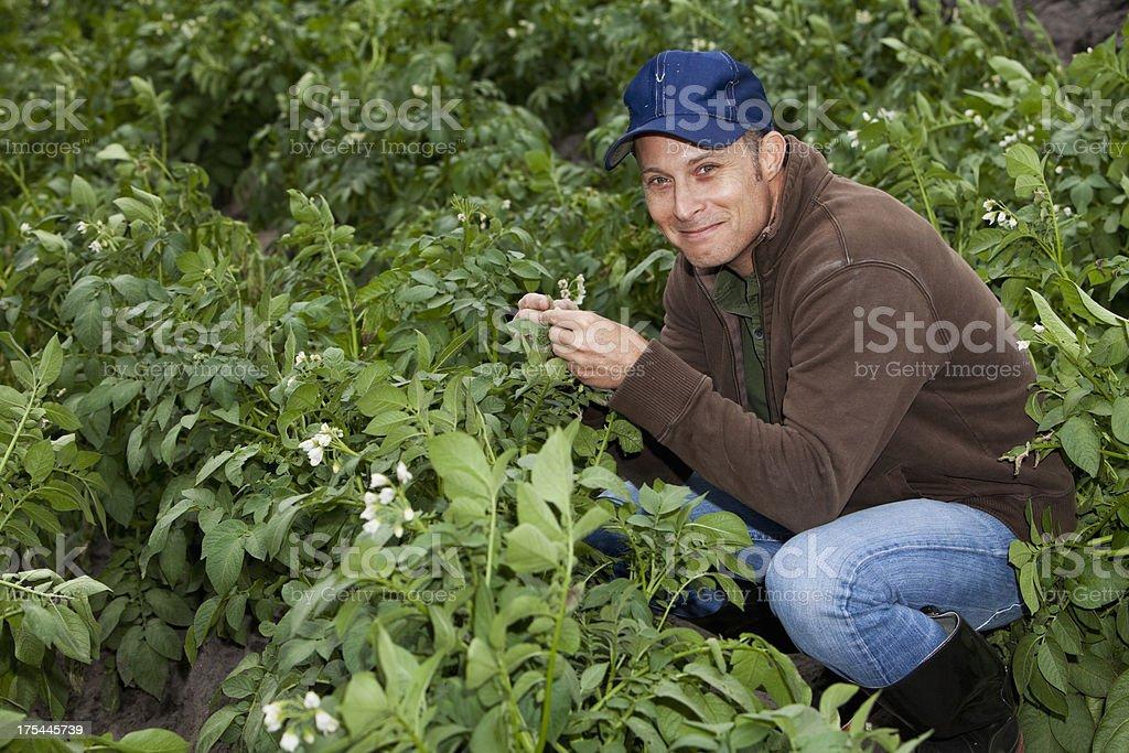 Farmer kneeling in field checking crop stock photo