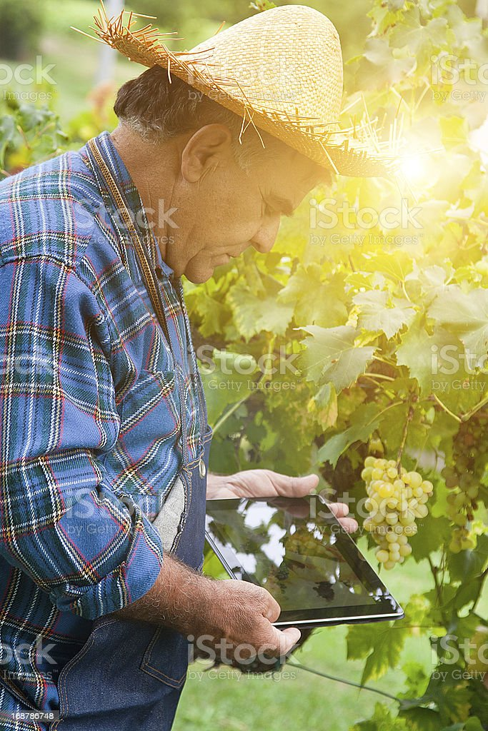 Farmer looking a digital tablet outdoor royalty-free stock photo