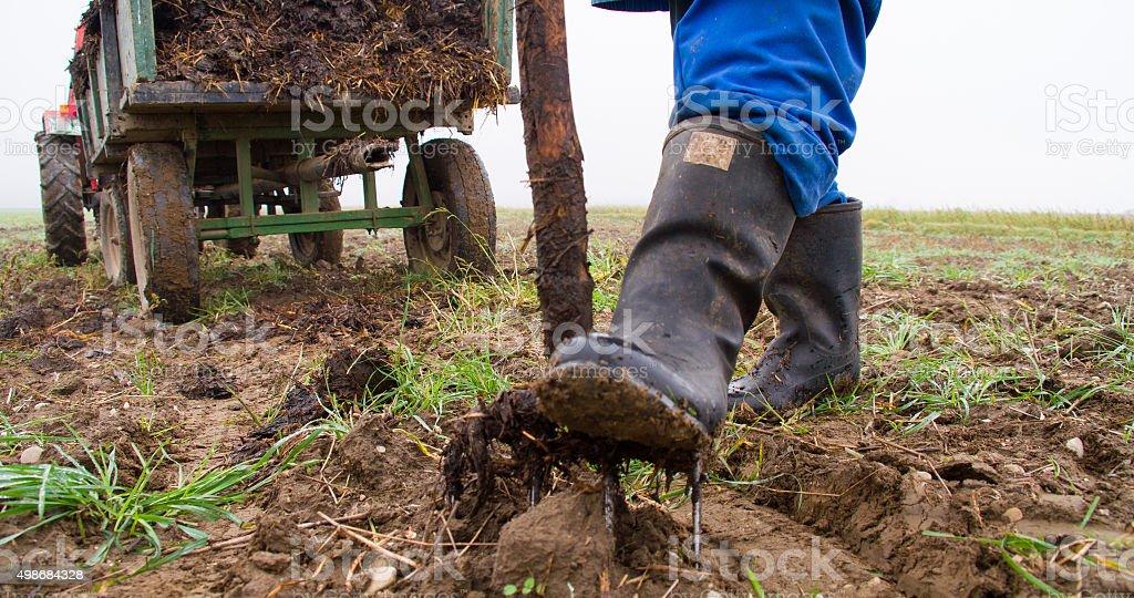 Farmer Loosening The Soil stock photo