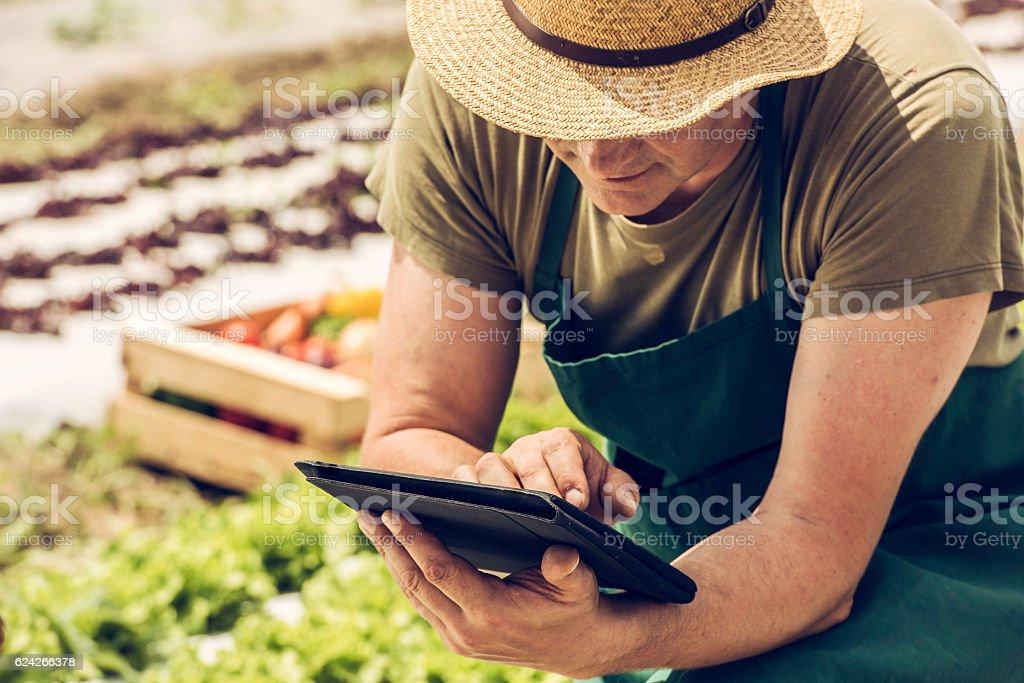 Farmer on a field with digital tablet stock photo