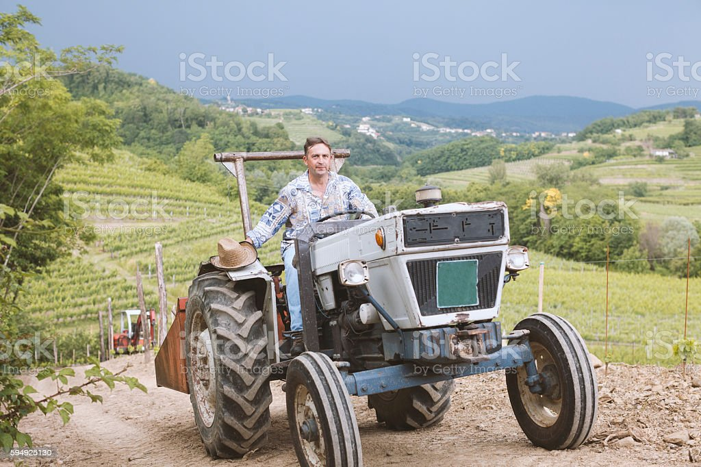 Farmer on Italian Old Tractor over Vineyard Hills stock photo