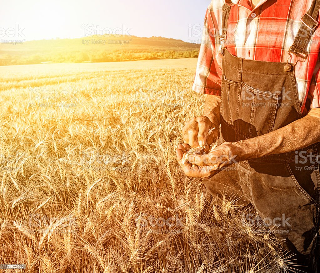 Farmer over looking the success of his crops stock photo
