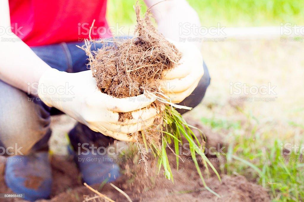 Farmer planting harvesting organic vegetables in the urban farm stock photo