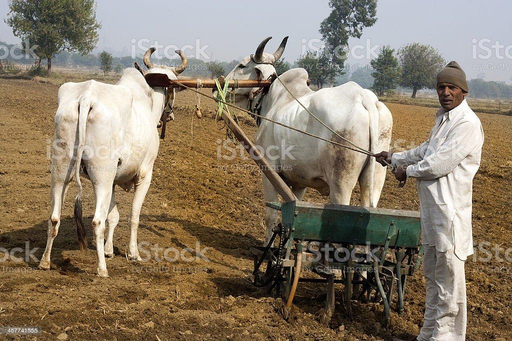 Farmer Plow the field stock photo