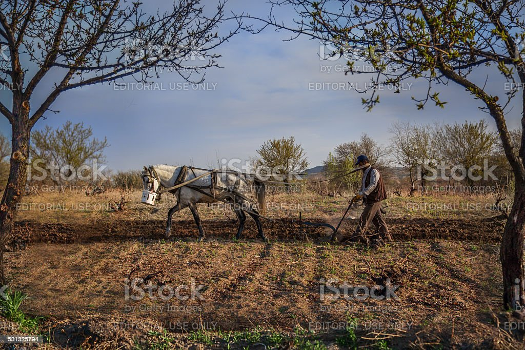 Farmer plowing his field with his horse. stock photo