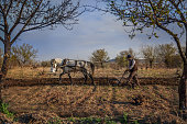 Farmer plowing his field with his horse.