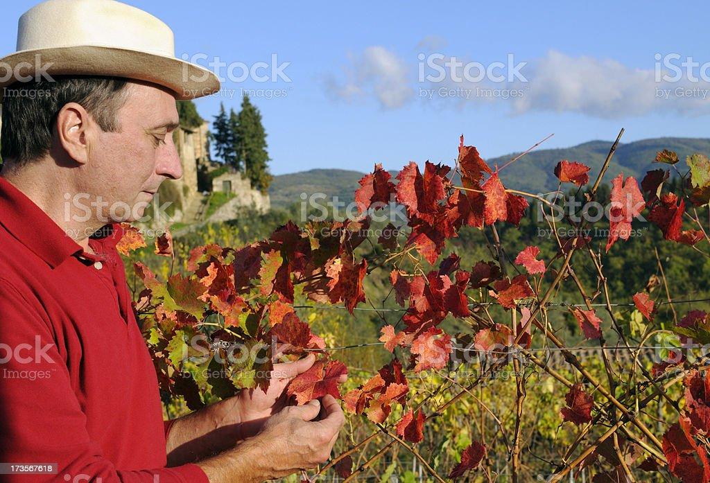 Farmer Portrait and Vineyard royalty-free stock photo