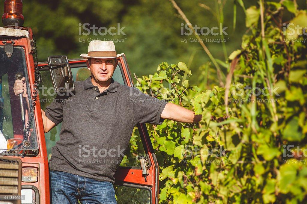 Farmer Portrait in the Vineyard stock photo
