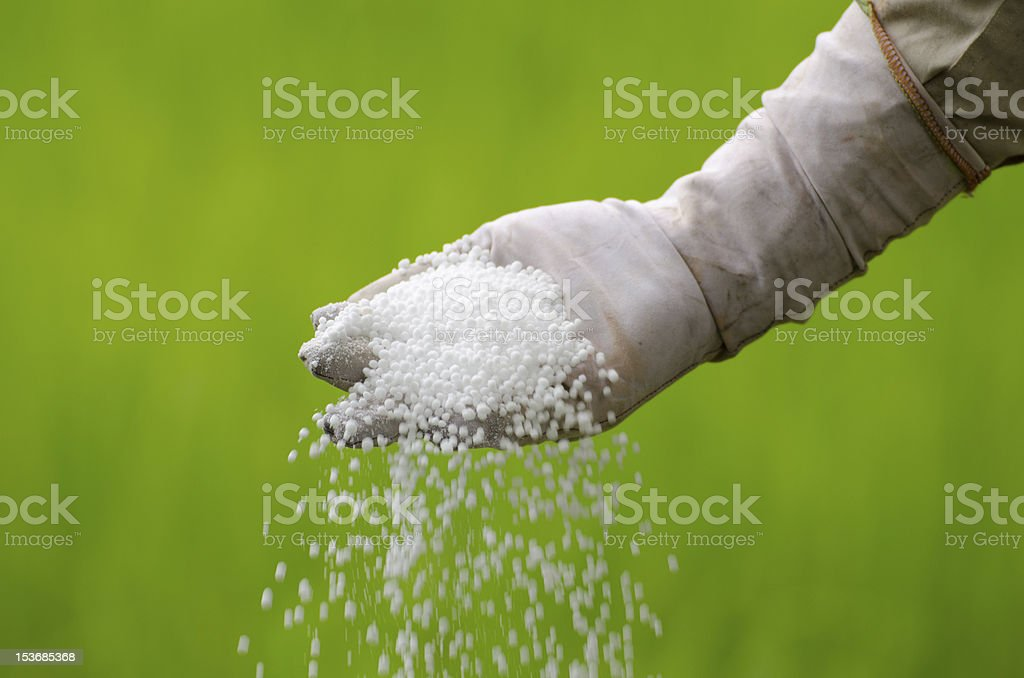 Farmer pouring chemical fertilizer in the field royalty-free stock photo