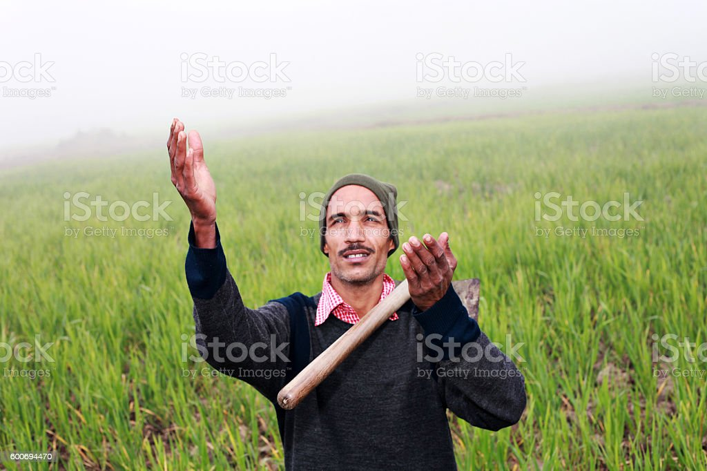 Farmer praying to god for wheat crop stock photo