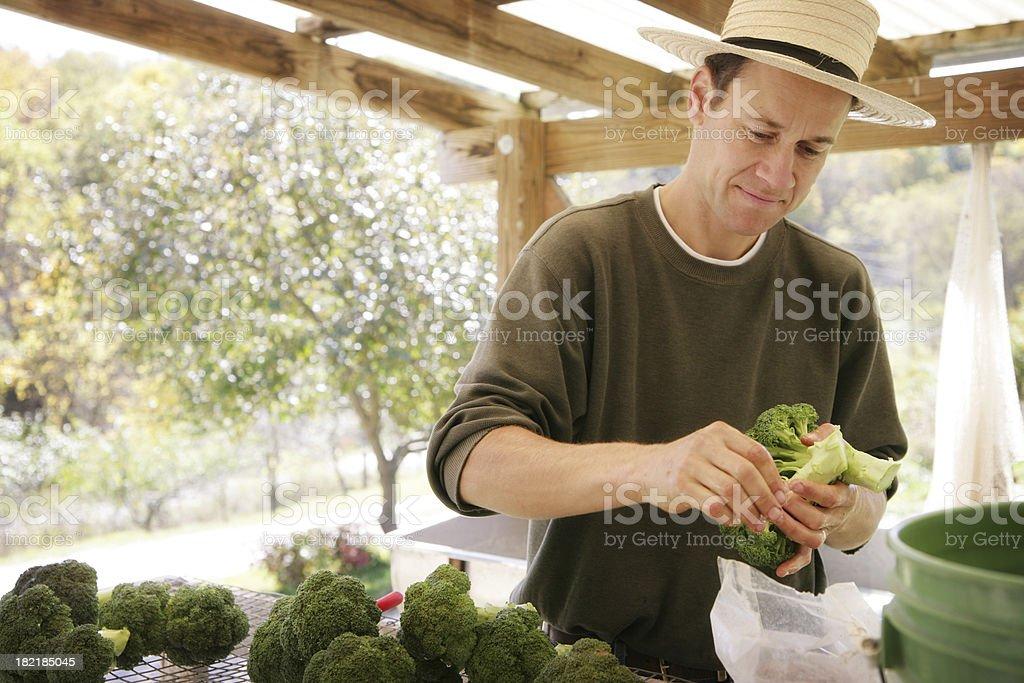Farmer Preparing for Community Farmer's Market royalty-free stock photo