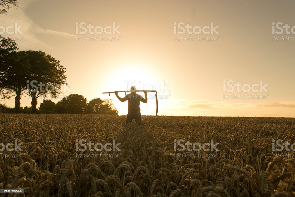 Farmer preparing to harvest stock photo
