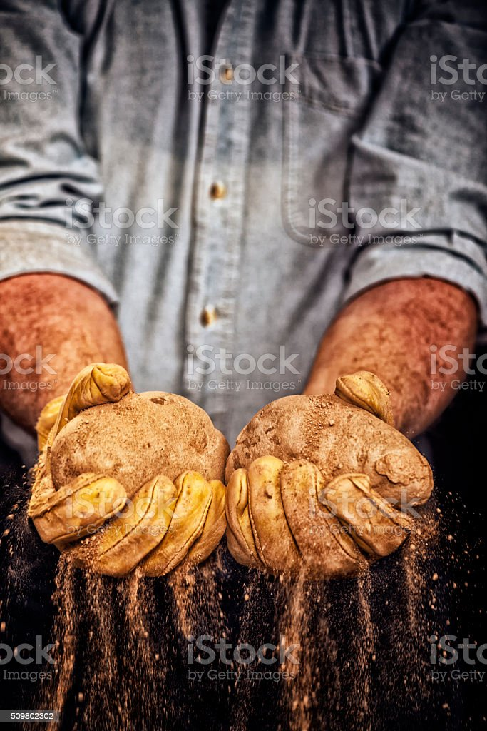 Farmer pulling a potato out of the ground stock photo