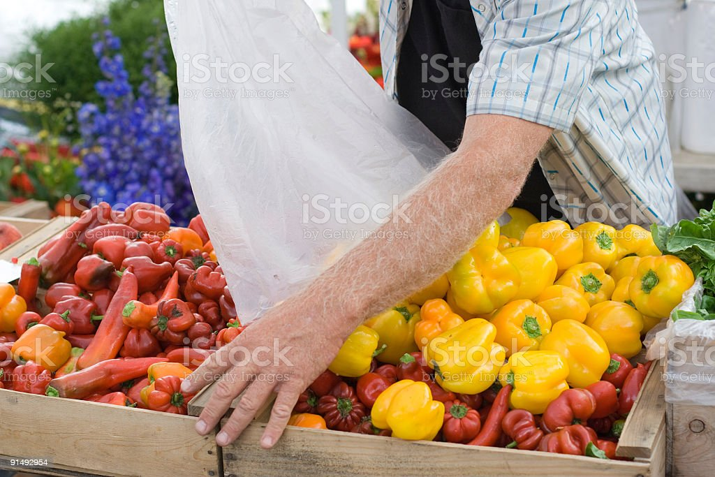 Farmer refills basket with peppers royalty-free stock photo