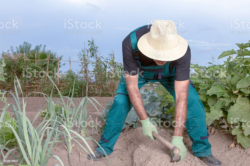 farmer sowing his field stock photo