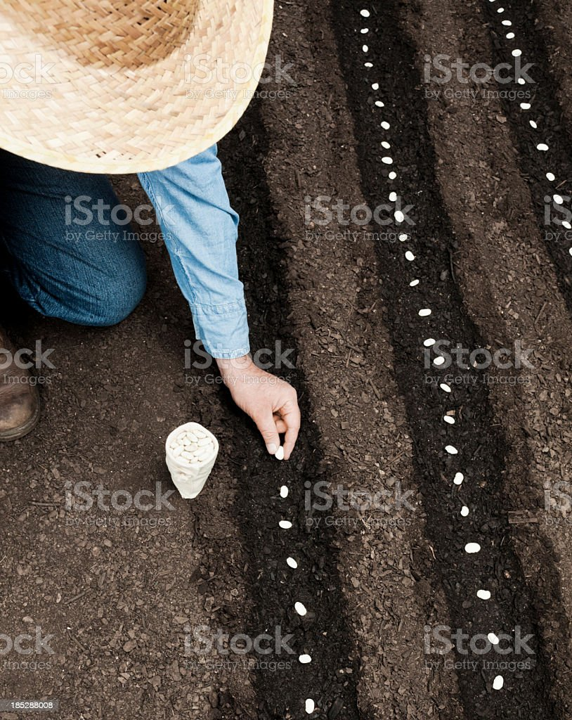 Farmer sowing stock photo