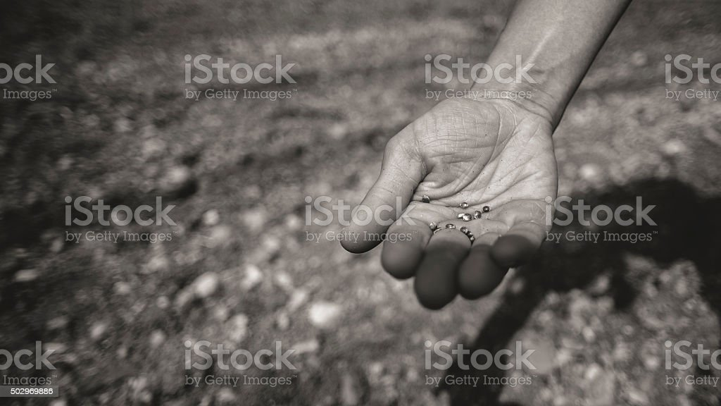 Farmer sowing seeds in the fields stock photo