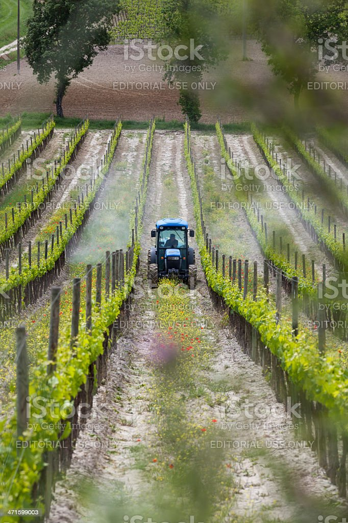 Farmer spraying his vines stock photo