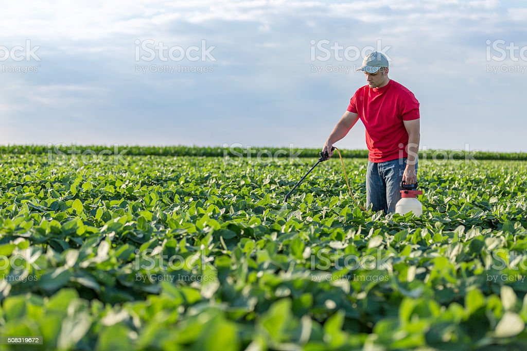 Farmer spraying soybean plants stock photo