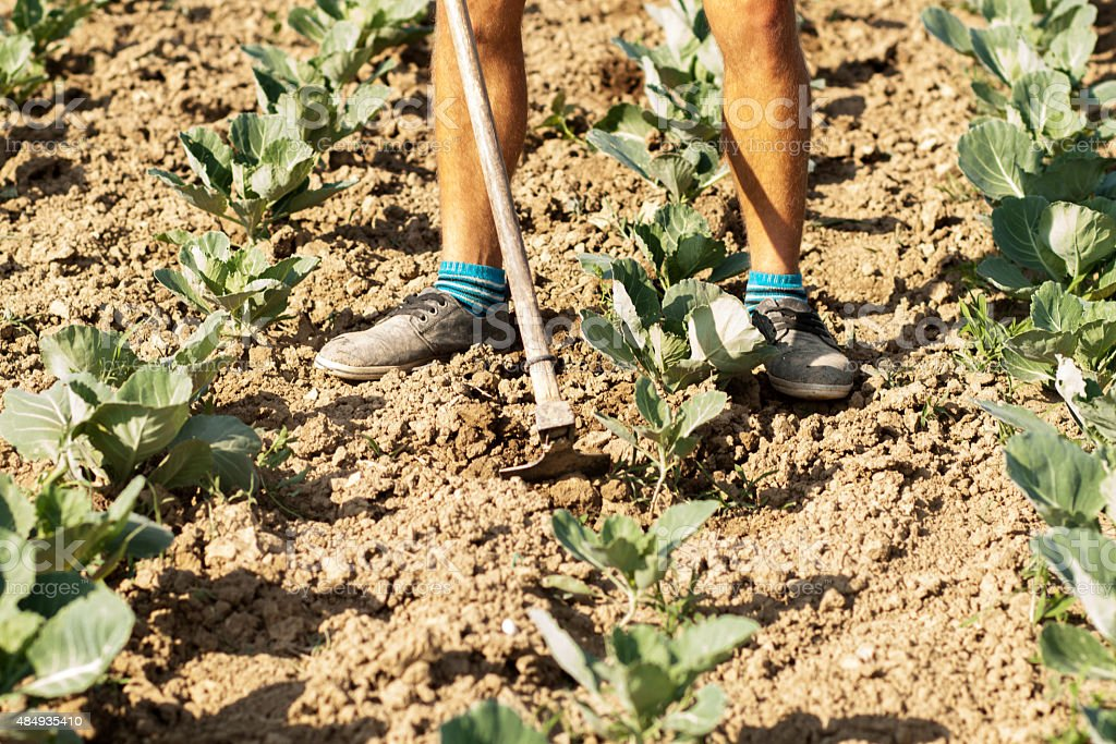 farmer standing at field and weeding with hoe stock photo