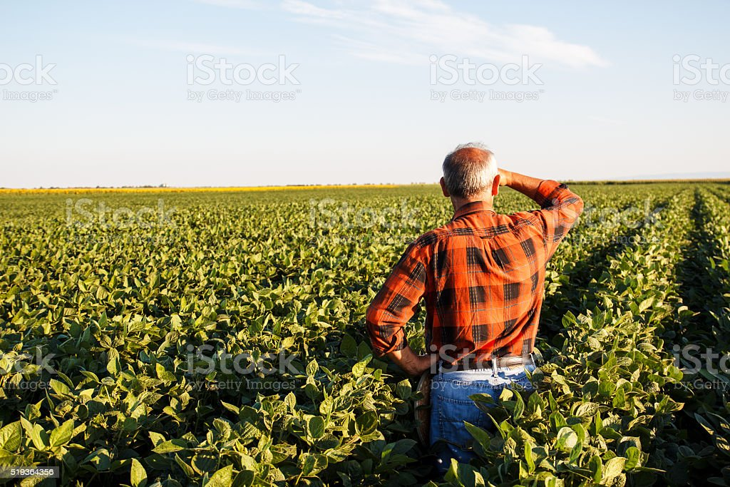 Farmer standing in a field and looks into the distance stock photo