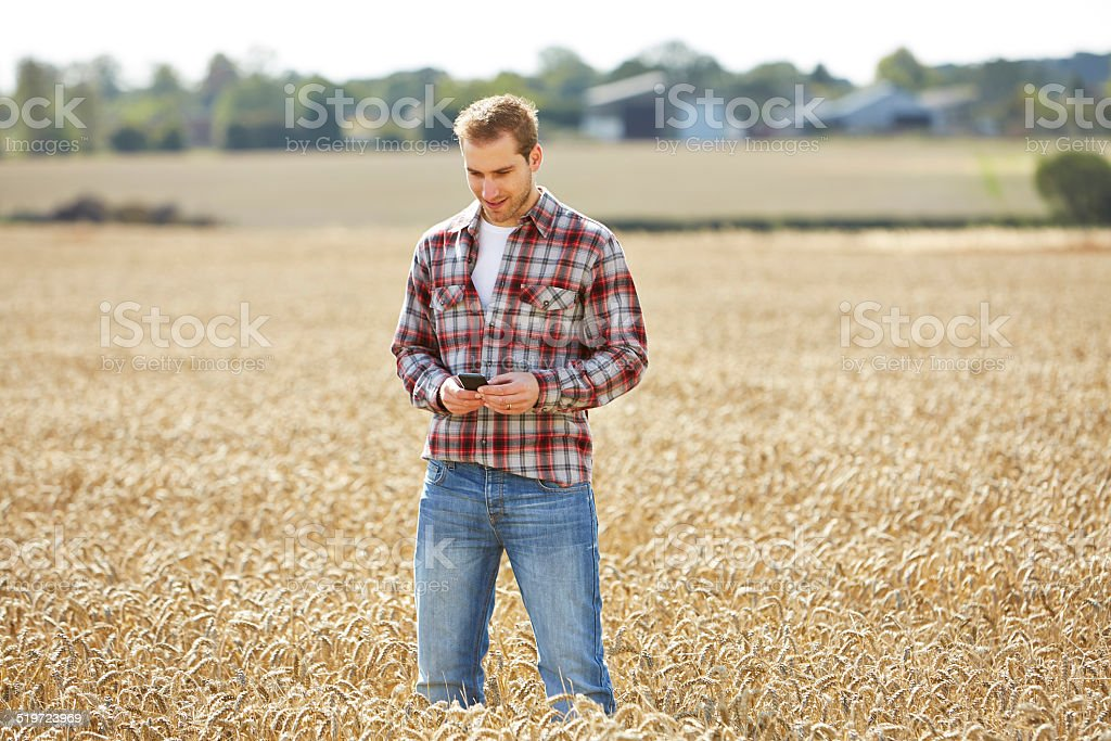 Farmer standing in a field typing on a cell phone stock photo