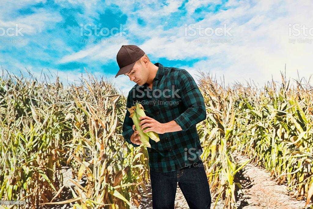 Farmer standing in corn farm stock photo