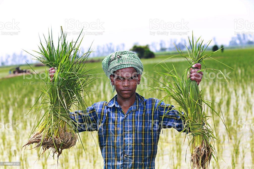 Farmer Standing Portrait in Green Field stock photo