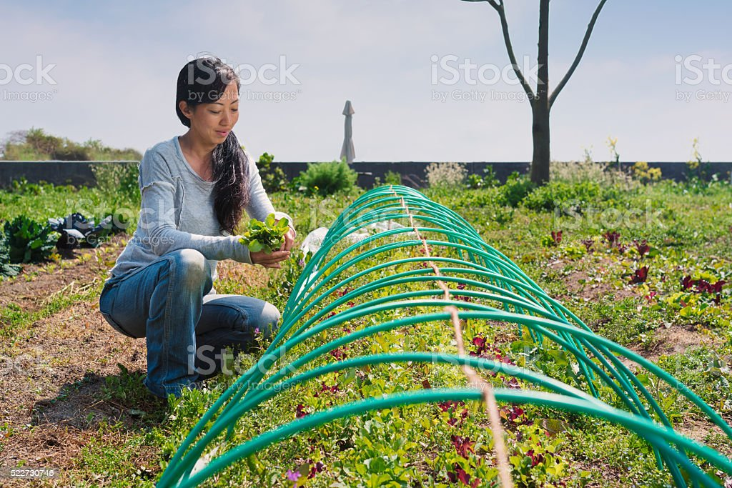 Farmer tending to her vegetable patch stock photo