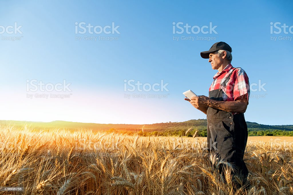 Farmer uses Tablet While Looking at Crops stock photo
