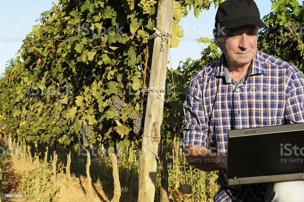 Farmer Using PC in his Vineyard at Sunset royalty-free stock photo