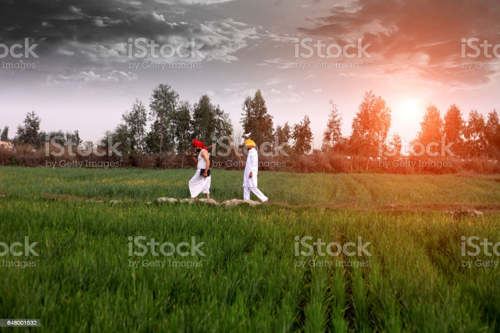 Farmer walking in the field in the morning stock photo