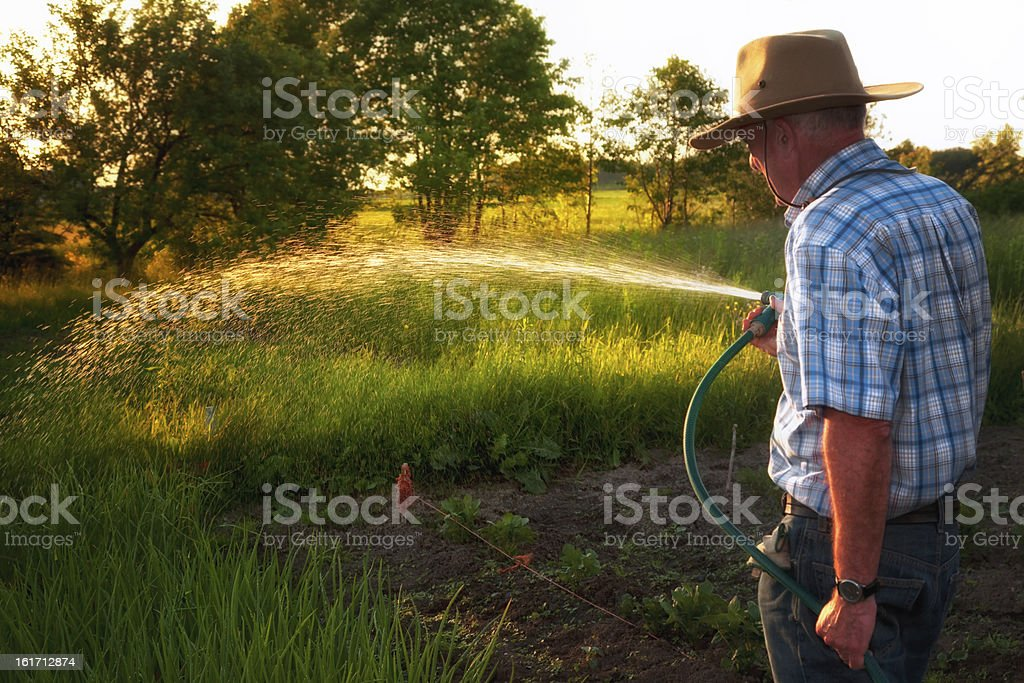 Farmer watering at golden hour royalty-free stock photo