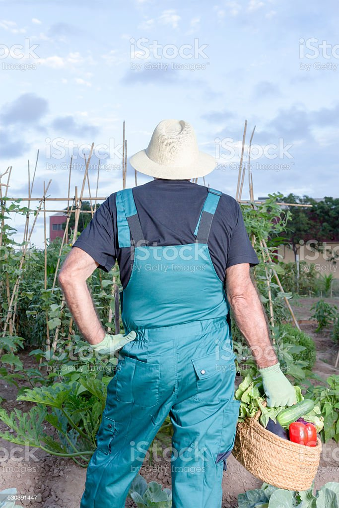 farmer with a basket of vegetables stock photo