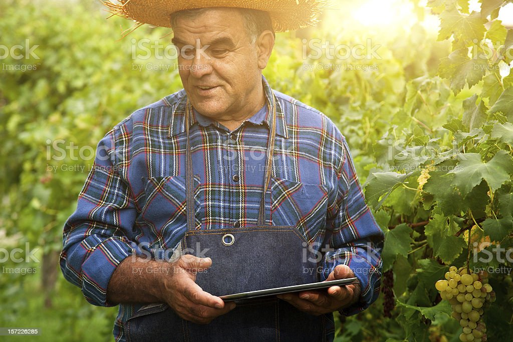 Farmer with a digital tablet in the vineyard stock photo