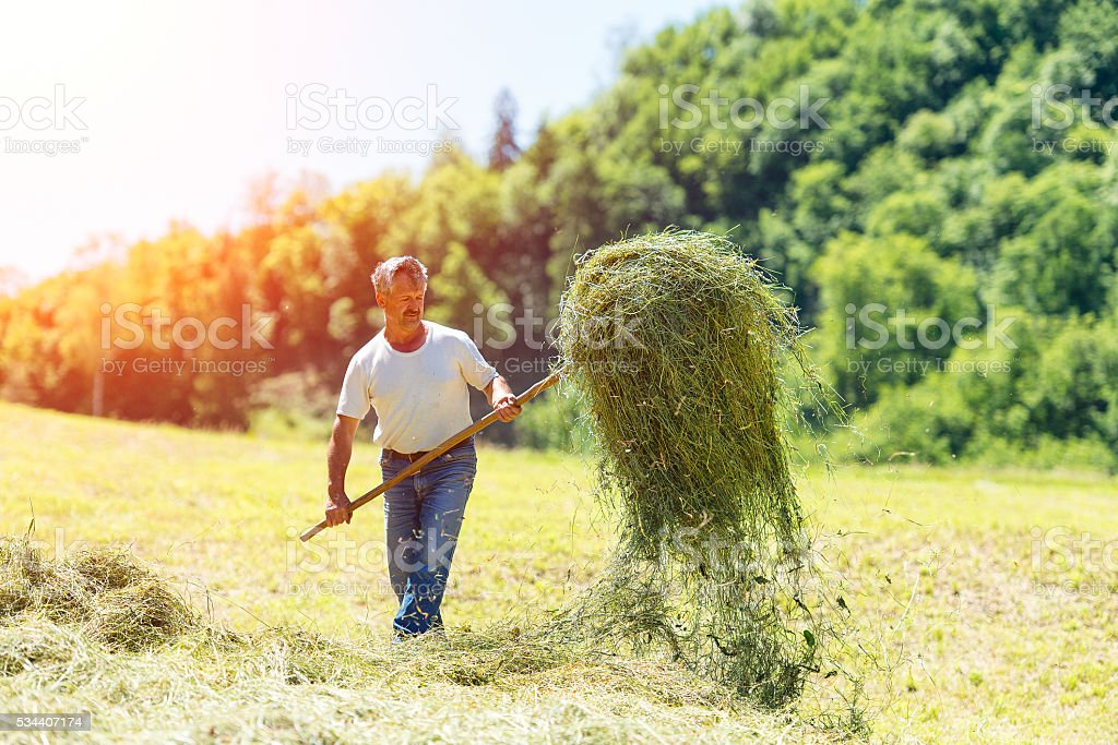 Farmer with a pitchfork collecting hay stock photo