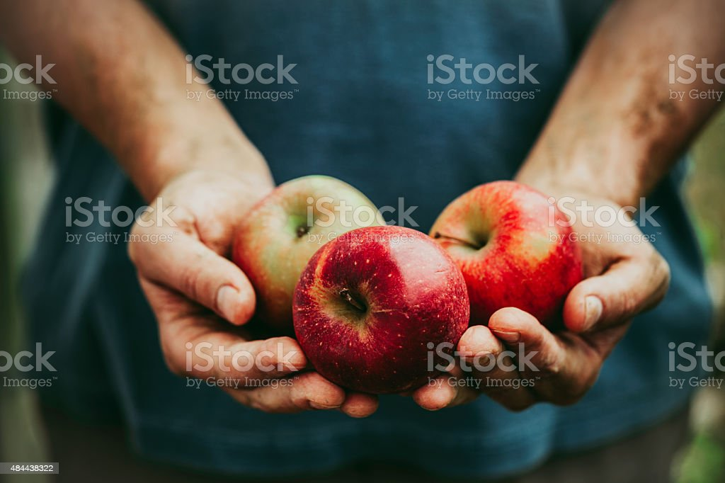 Farmer with apples stock photo