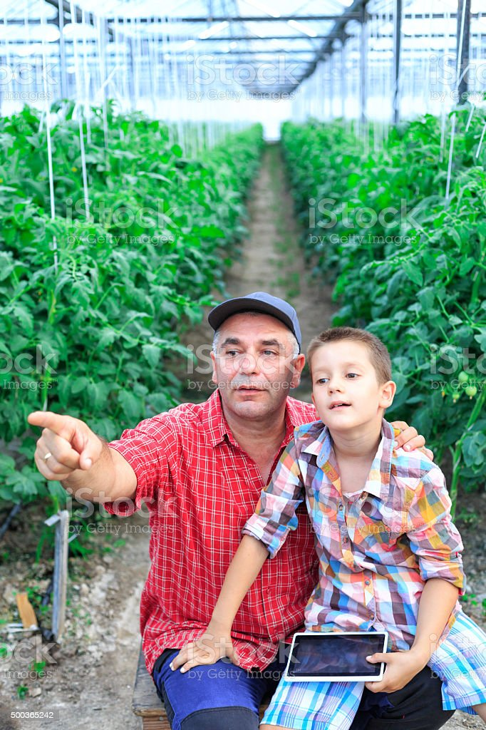 Farmer with child In Greenhouse pointing at Tomato Plants stock photo