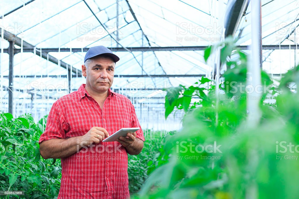 Farmer with Digital Tablet In Greenhouse stock photo