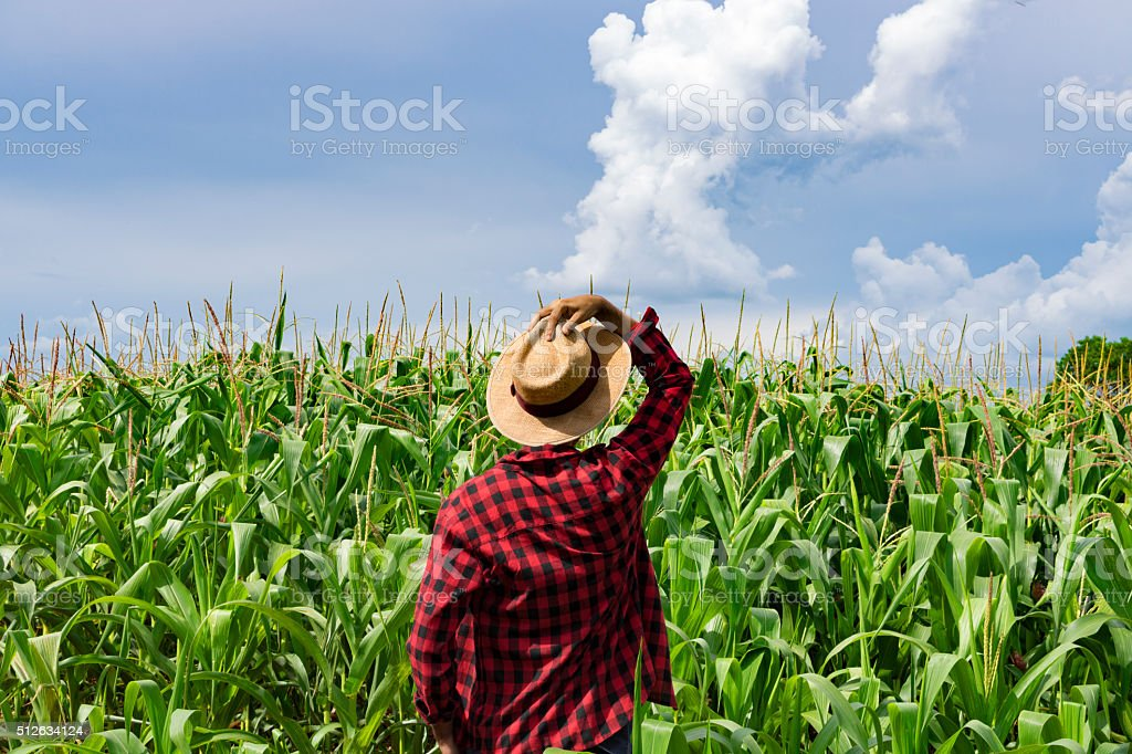 Farmer with hat looking the corn plantation field stock photo
