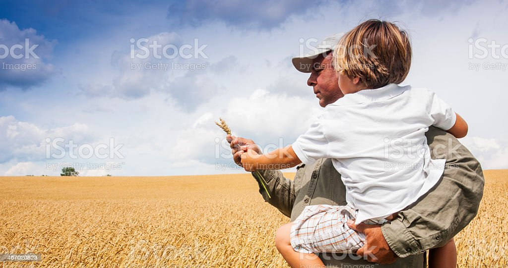 Farmer with his son checking the wheat crop stock photo