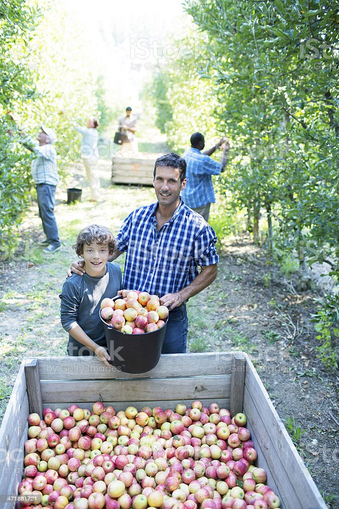 Farmer with his son in the orchard stock photo