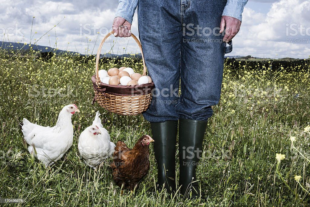 Farmer with organic eggs stock photo