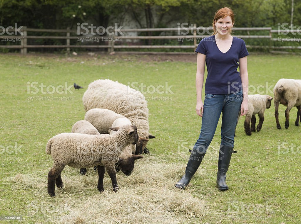 A farmer with sheep royalty-free stock photo