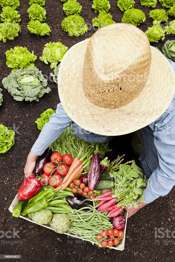 Farmer with vegetables stock photo