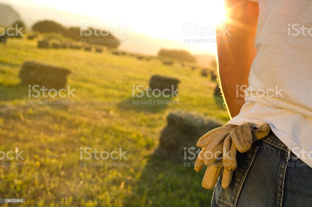 Farmer working in a hay field who uses gloves royalty-free stock photo