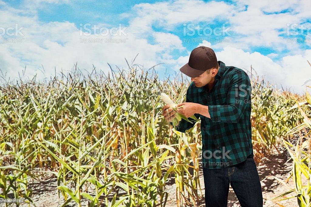 Farmer working in corn farm stock photo